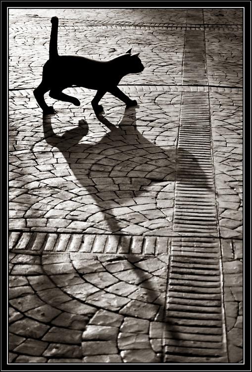 00_sombra-de-gato