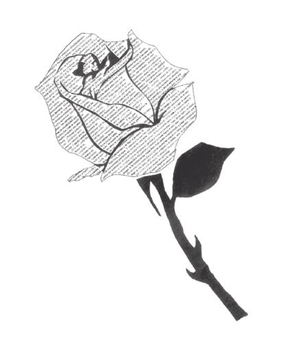 Rosa ILustrada