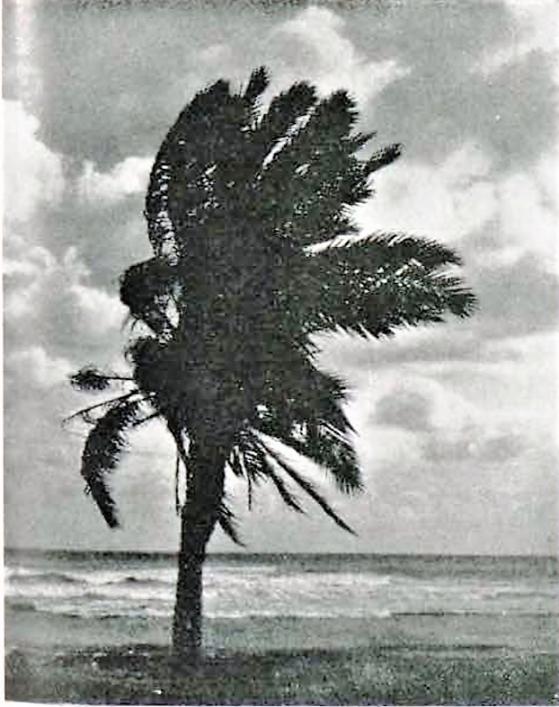 Temporal levante_playa de las Huertas_década 1930 (2)