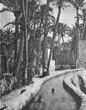 Vista acequias Huerta Mayor_Elx 1900