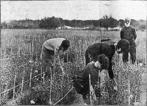 00_Pepet y Familia traballant al camp de clavells_Mirador 11-7-1929