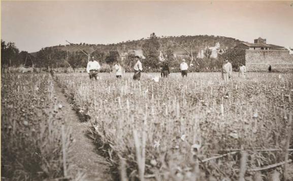 Camp Clavells de la família Ferrer_Llançà_anys 20_Arxiu Familiar