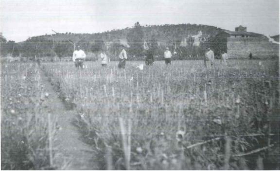 vista_Plantación claveles Llançà_Ferrer